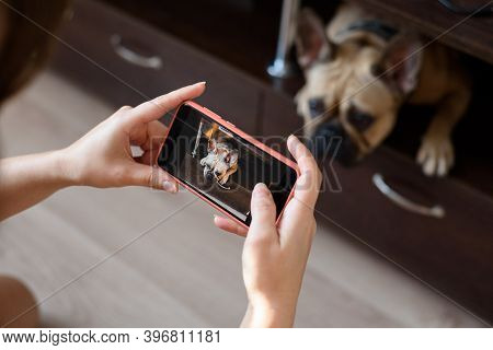 A Woman Photographs A French Bulldog On A Phone Camera. Photo Of A Dog On A Phone Screen Held By A P
