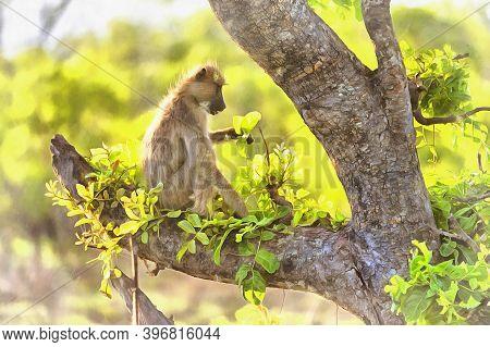 Olive Baboon, Papio Anubis, Anubis Baboon, Tanzania East Africa.