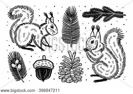 Forest Clipart. Squirrels, Acorn, Pine Cone, Spruce Branch, Buds, Pine. Black Ink Vector Design. Iso