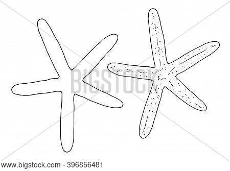 Hand-drawn Vector Outline Of A Black Starfish. Illustration Of Doodles Of Sea Path. Decorative Black