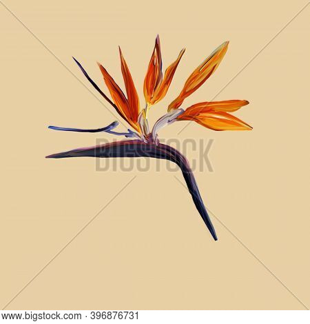 Gouache Painted Bird Of Paradise. Watercolor Illustration With Realistic Branch Of Strelitzia Isolat