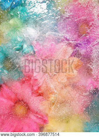 Ice Flowers Frozen Flower Heads Frozen In A Solid Block Of Frozen Water
