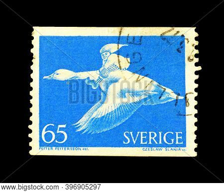 Sweden - Circa 1977 : Cancelled Postage Stamp Printed By Sweden, That Shows Birds, Circa 1977.