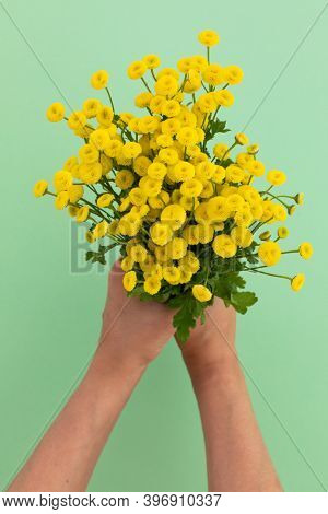 Person holding bunch of yellow flowers on green background. flower spring summer nature freshness copy space.