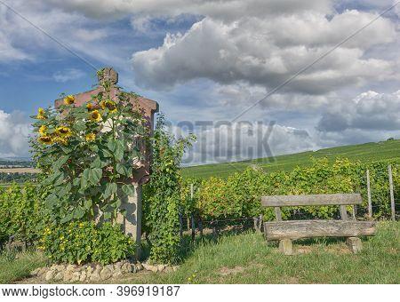 Vineyard Landscape At Wissberg In Rhinehessen Wine Region,germany
