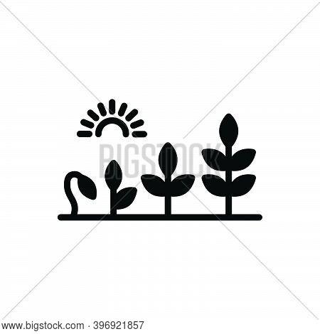 Black Solid Icon For Evolution Development Growth Rise Flourish Transformation Growth Sprout Garden