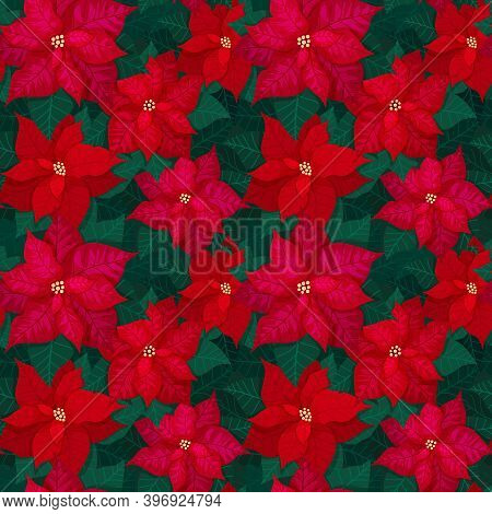 Bright Seamless Christmas Pattern With Red Poinsettia And Green Leaves. Festive Background For Texti