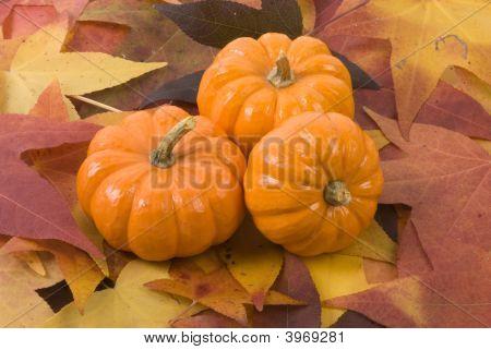 Mini-Pumpkins On Fall Leaves