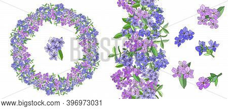 Vector Flower Romantic Set With Different Phloxes On White.