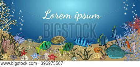 Underwater Banner With Exotic Fish. Ocean Creatures.