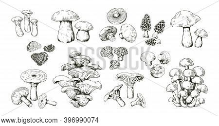 Mushroom Sketch. Realistic Hand Drawn Pencil Outline Edible Forest Product. Isolated Collection Of M