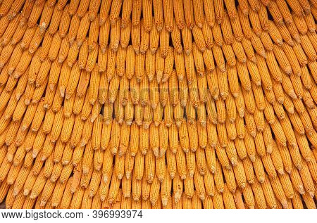 Corn Texture For Background Wallpaper. Background From Corn. Top Quality Orange Maize With Large Mai