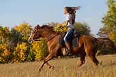 Beautiful girl riding a horse  in countryside. poster