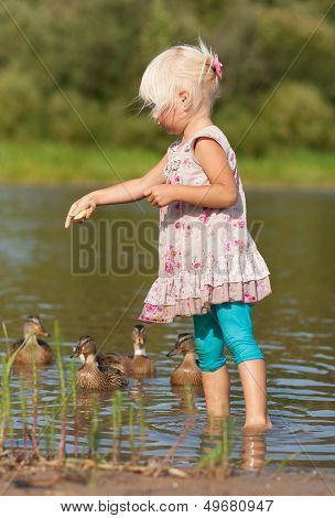 Little Girl In Water Feeding Ducks With Biscuits