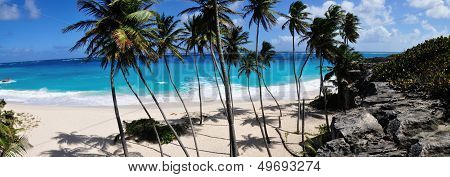 Panorama of Beach And Palm Trees