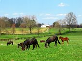 horse grazing on the farm poster