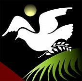 Illustration of a dove with leaf in beak poster