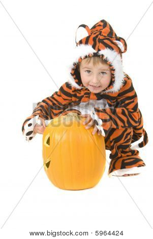 Toddler In Tiger Costume Over Pumpkin