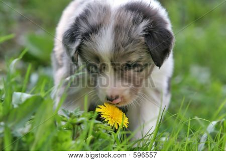 Smelling The Dandelion
