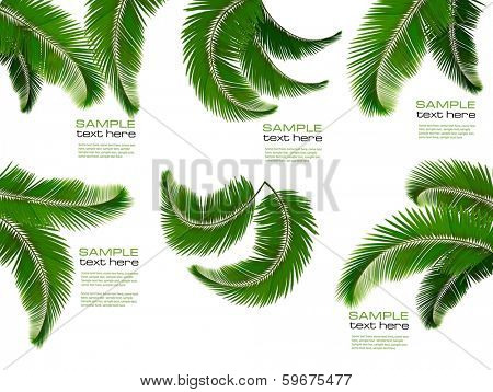 Set of palm leaves on white background. Vector illustration.