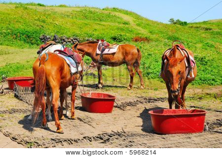 Horses feeding and resting. Symbolizes concepts such as travel and vacation adventure and exploration and animal rights. poster