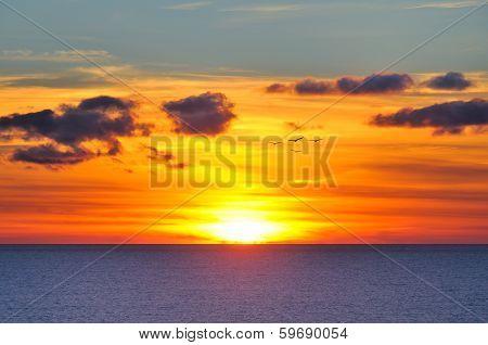 Sunset with few gulls over sun