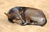 quiet dog on yellow sand poster