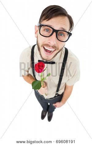 Geeky lovesick hipster holding rose on white background