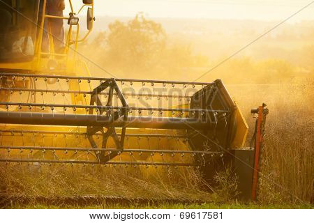 Combiner harvesting wheat field in detail