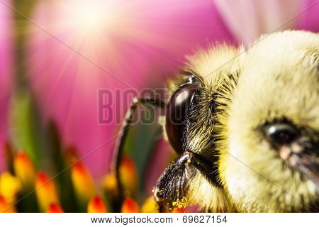 Bee on pink flower extreme macro