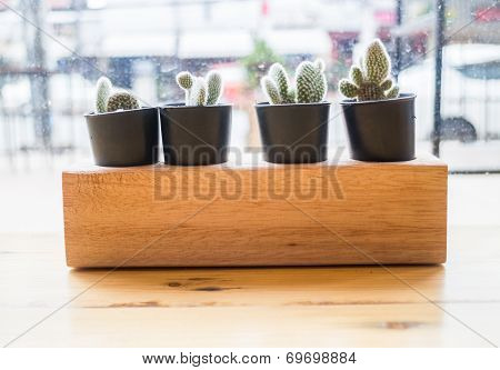 Cactus Plant Pot Decorated Wooden Table