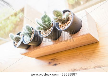 Little Cactus Plant Decorated Wooden Table