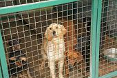 Abandoned dogs in dogs shelter is waiting for a new owners poster