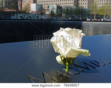 Rose at September 11 Memorial Reflecting Pool