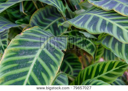 tropical plant with beautiful green leaves in detail poster