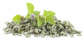 Fresh And Dry Spearmint