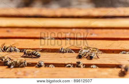 Bees on honeycomb frames
