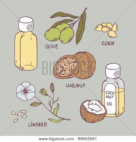 Healthy oil set. Coconut, walnut, olive, corn and linseed