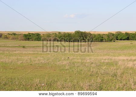 Great Plains Prairie
