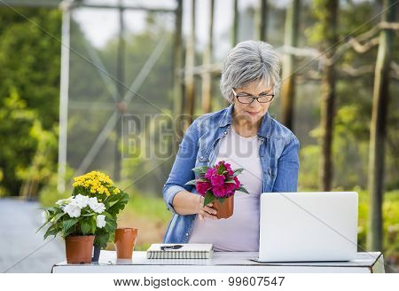 Beautiful mature woman working in a greenhouse holding flowers and taking notes in the laptop