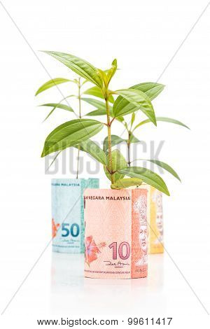Concept Of Green Plant Grow On Malaysia Ringgit Currency Note