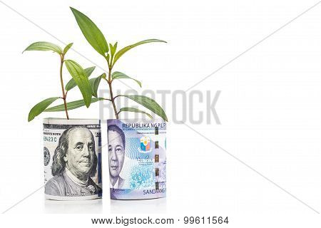 Concept Of Green Plant Grow On Usd Against Philippines Piso Currency