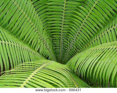 Open Green Fern Leaf Background