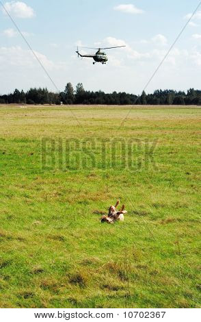 Dog And Helicopter On Airfield.