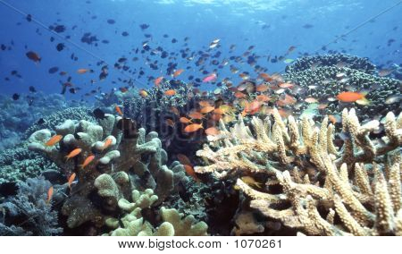Indonesia Reef