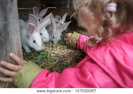 Blonde Toddler Girl Giving Fresh Grass To Farm Domesticated White Rabbits In Animal Hutch