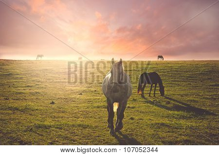 Horse running behind the sun
