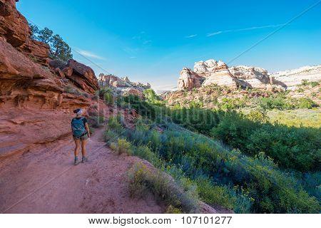 Hiker On A Calf Creek Canyon Trail