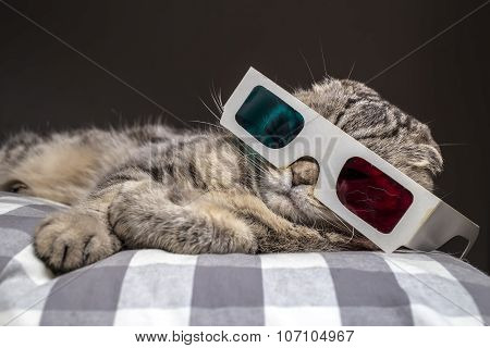 funny cat watching a movie on television in 3D glasses