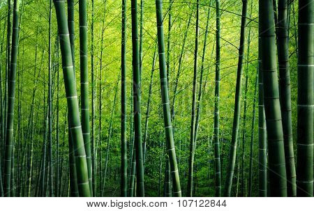 Bamboo Forest Trees Nature Concept